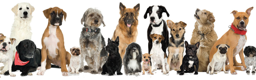 3 Tips When Adopting a Pet